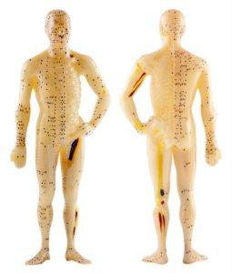 mannequin médecine chinoise, recto verso
